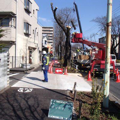 27街路樹不適樹
